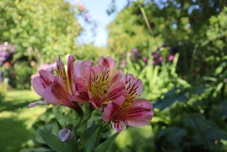 16 Normandie Jardin D Anglique