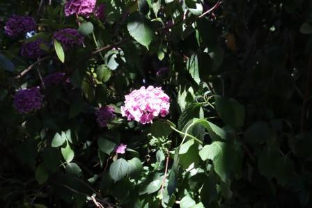 17 Normandie Jardin D Anglique