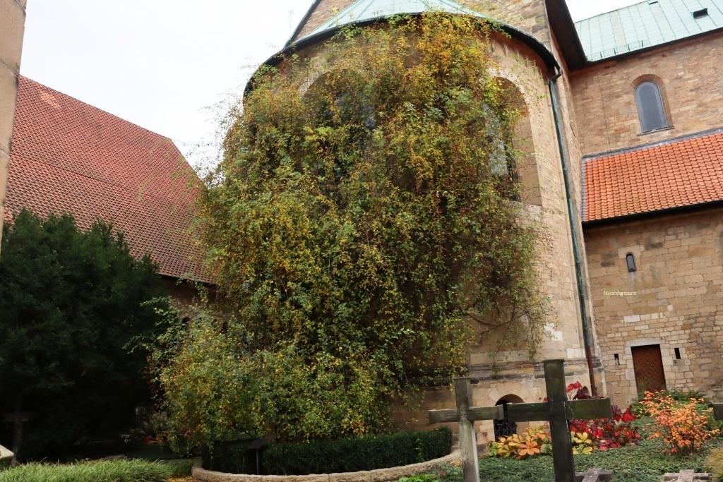 16 Leipzig Hildesheim der taunsend Jährige Rosenstock