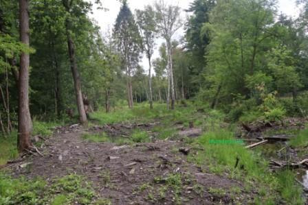 16 Neandersteig 11. Juli Etappe 16 Hildener Stadtwald