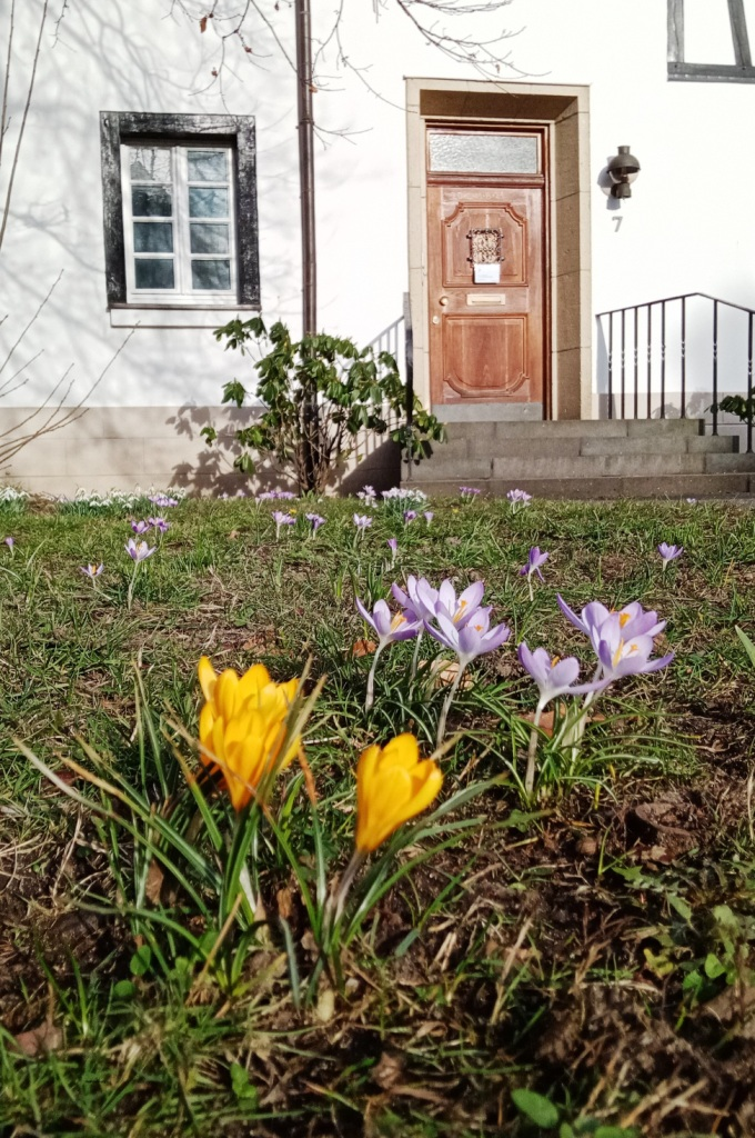 1 Der Frühling grüßt am Pfarrhaus Erkrath