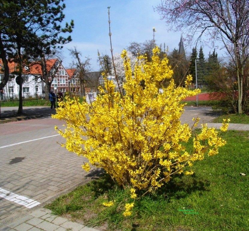 15 Altes Land Frühling