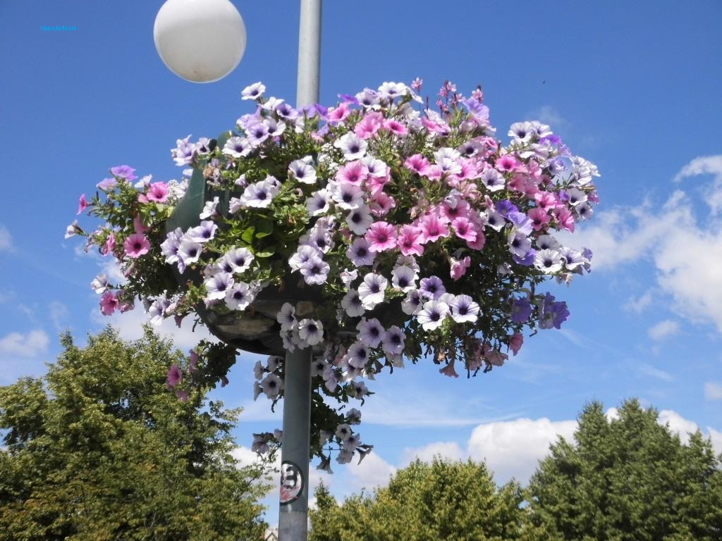 11 Saarland Blumenampel